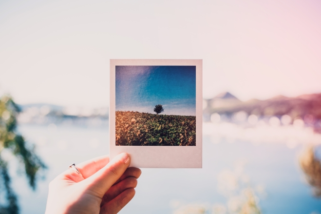 Canva - Person Holding Photo of Single Tree at Daytime.jpg