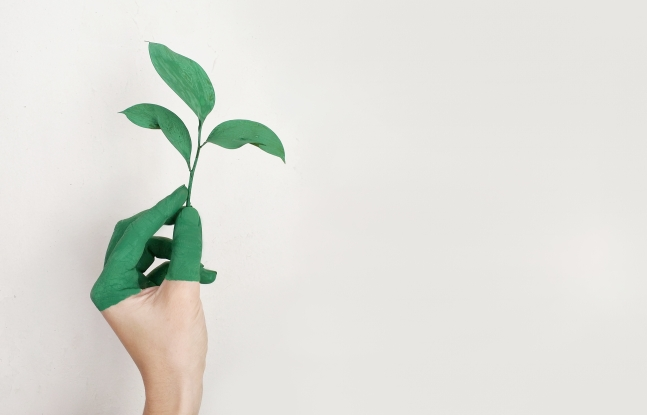 Canva - Person's Left Hand Holding Green Leaf Plant.jpg